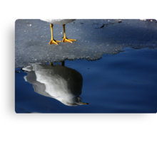 A Gull Reflects Canvas Print