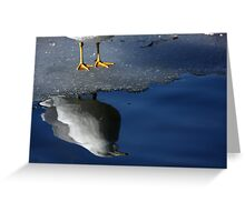 A Gull Reflects Greeting Card