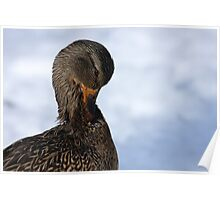Mallard Neck Stretch Poster