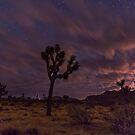 Magic night by Gerard Rotse