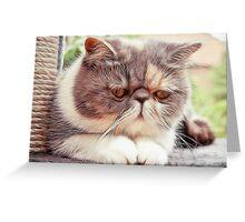 Exotic Shorthair - Persian Cat - Fractalius Greeting Card