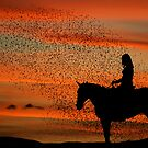 Rural Sunset by susi lawson