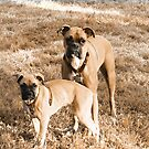 Beautiful Boxers by Marcia Rubin