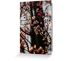 Cherry Bliss Greeting Card