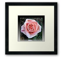 Sweet Serenity - Pink Rose in Reflection Frame Framed Print