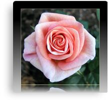 Sweet Serenity - Pink Rose in Reflection Frame Canvas Print