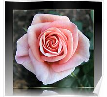 Sweet Serenity - Pink Rose in Reflection Frame Poster