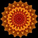Chrysanthemum Kaleidoscope. by Lee d'Entremont
