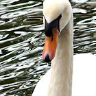Swan (iPhone Case) by AuntDot