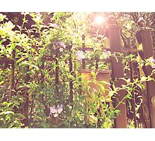 an unattended garden is my heart Photographic Print