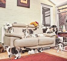 Exotic Shorthaired Persian Cat Multiplicity by Liam Liberty
