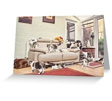 Exotic Shorthaired Persian Cat Multiplicity Greeting Card