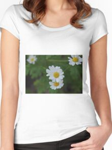 Daisies Women's Fitted Scoop T-Shirt