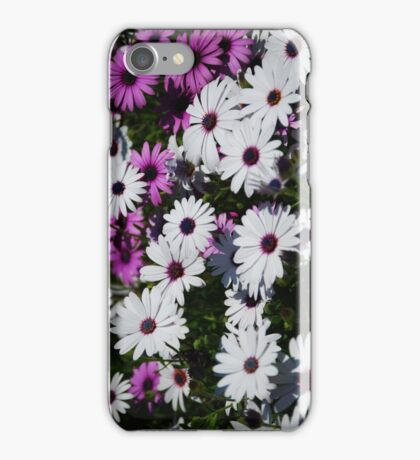 African Daisies iPhone Case iPhone Case/Skin