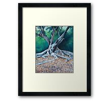 Morton Bay Fig Framed Print