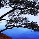 lone tree by ANNABEL   S. ALENTON