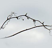 Bramble Tendrils Against Winter Sky by MotherNature