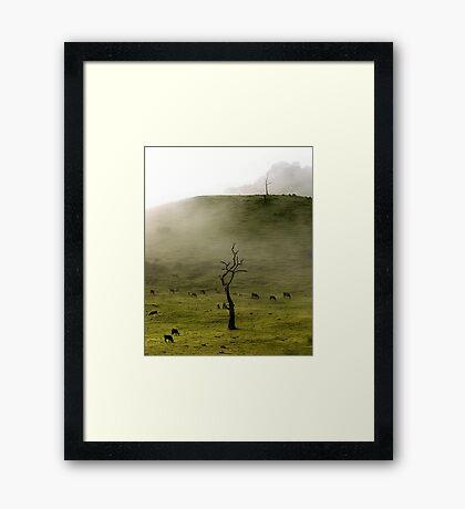 Early Morning Gumeracha, Adelaide Hills Framed Print