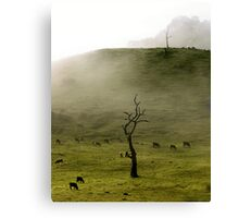 Early Morning Gumeracha, Adelaide Hills Canvas Print