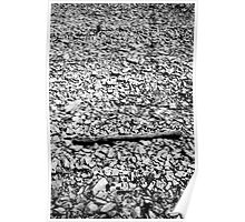 Drift wood and river bed Poster