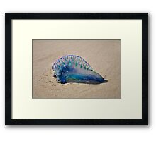 Blue Bottle - Portugese Man-o-War Framed Print
