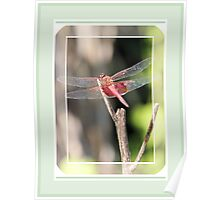 Dragonfly in Pink Poster