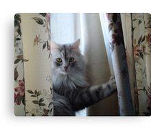 Window Kitty Canvas Print