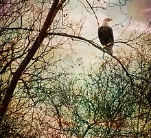 Perched and Alert by KBritt