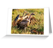 Ruppell's Vultures Greeting Card