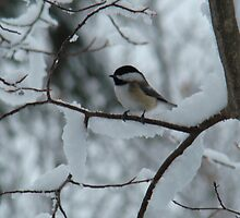 Chickadee In Winter by PaulineHoward