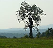 Graceful Tree by PaulineHoward