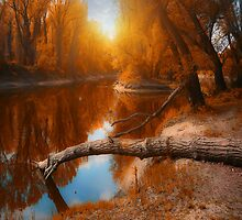 autumn in the air by ildiko neer