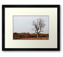 Wildlife Community Center Framed Print