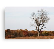Wildlife Community Center Canvas Print