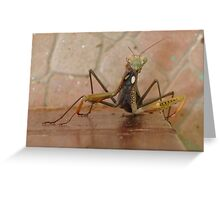 Praying Mantis w'th Eye Contact Greeting Card