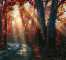 let the sunshine in by ildiko neer