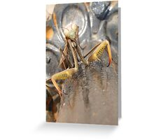 Praying Mantis in Macro Greeting Card