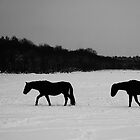 Horses On Snow by Alan Harman