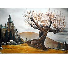 Whomping Willow :) Photographic Print