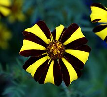 Black and Yellow by heather1990
