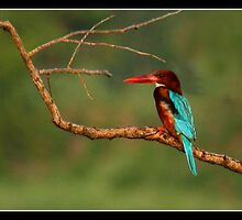 The Kingfisher by J.N. SINGH
