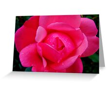 Fall Roses V Greeting Card