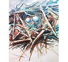 Bird nest  Photographic Print
