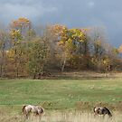 Grazing Under Stormy Skies by Tracy Wazny