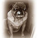 Pug For Sale by Jonice