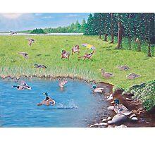 """Sitting Ducks"" Photographic Print"