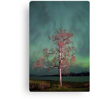Tree & Aurora Borealis -III Canvas Print
