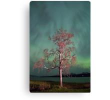 Tree & Aurora Borealis -III Canvas Print
