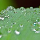 droplets on green leaf by annabella67