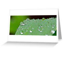 droplets on green leaf Greeting Card